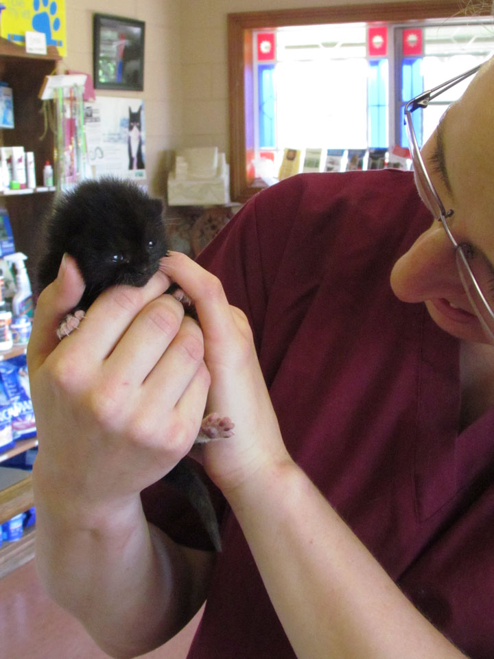 Kitten Care in Mowbray