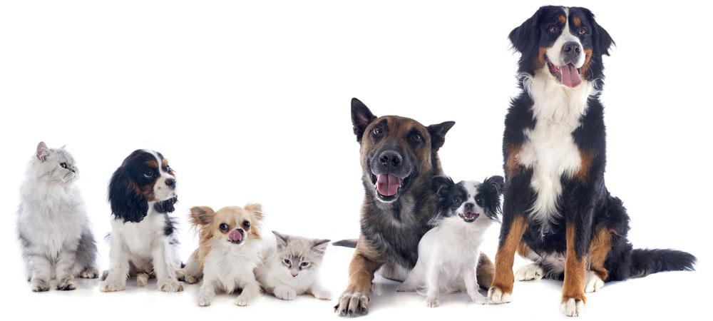 Mowbray Vet your local Veterinary Clinic